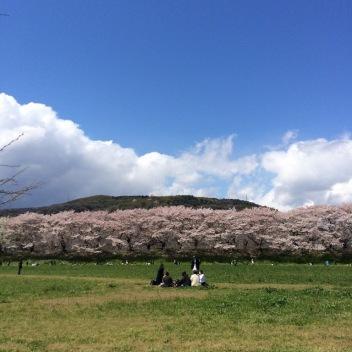 写真 2014-04-12 19 59 57