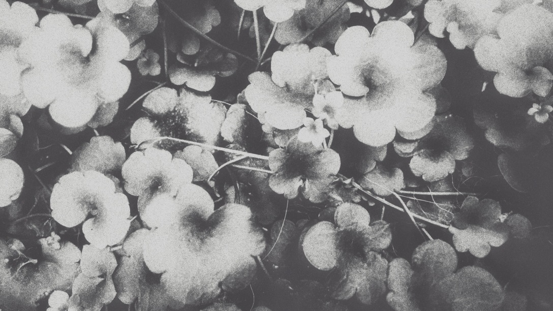 Processed with VSCOcam with x3 preset